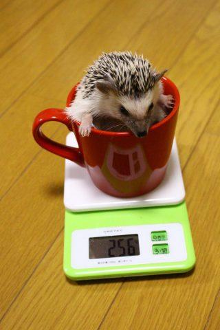 体重測定会