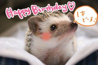 ハリちゃん1歳のお誕生日('ω')