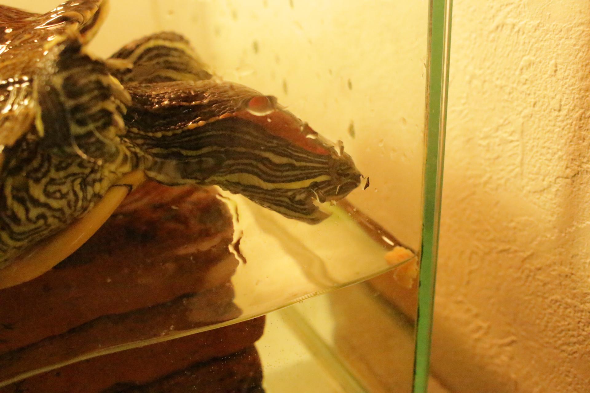 カメ カメのごちそうパン