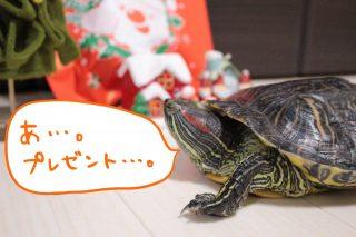 かめたんのクリスマス