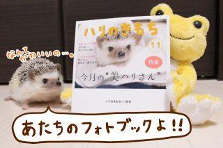 nohanaのフォトブックが届きました!