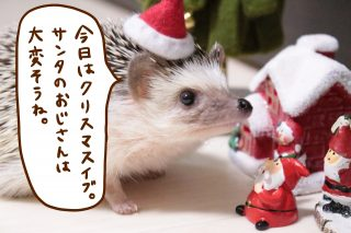クリスマスイブですね!