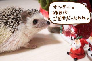 クリスマスですね!