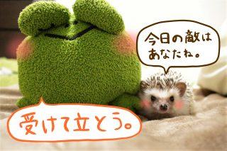 ハリちゃん vs カエル