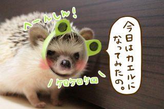 へーんしん! – カエル編