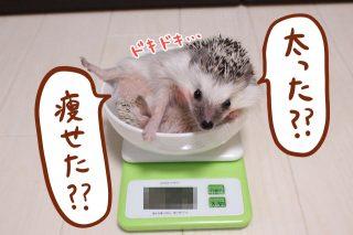 新しいお皿で体重測定会!
