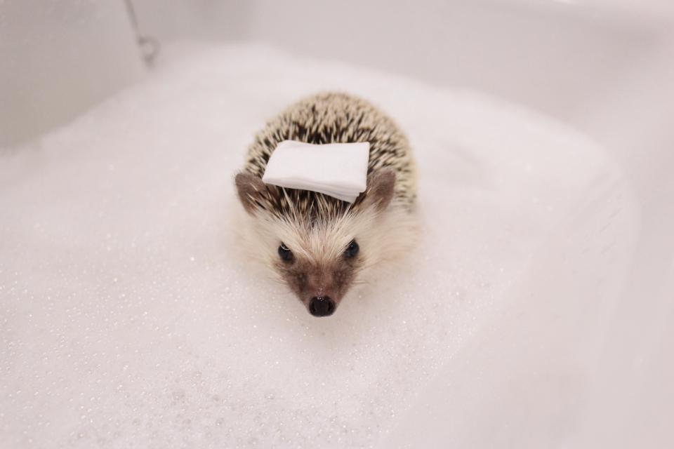 ハリネズミ お風呂