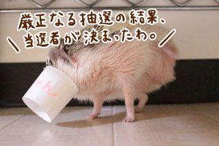 フォトコン、ハリちゃん特別賞決定!
