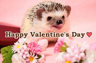 バレンタインですね♪