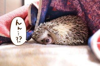 「眠いのよ。。。」