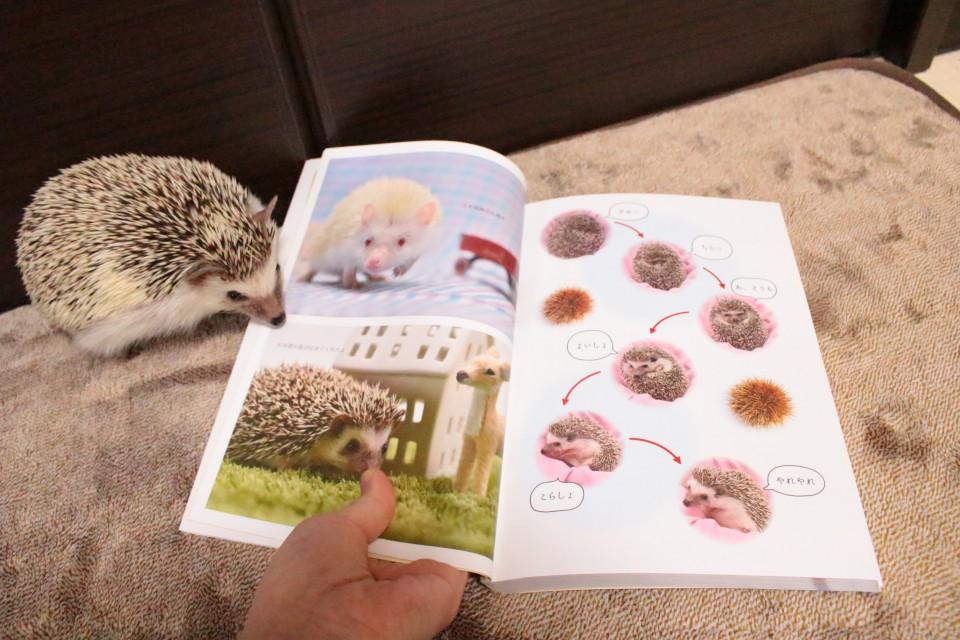 ハリネズミ 飼育書 本