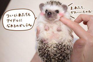 ハリちゃん、明日のoha!4でテレビデビュー★