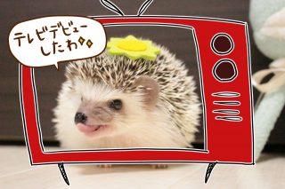 ハリちゃんがテレビに出ましたぁぁぁ!!!