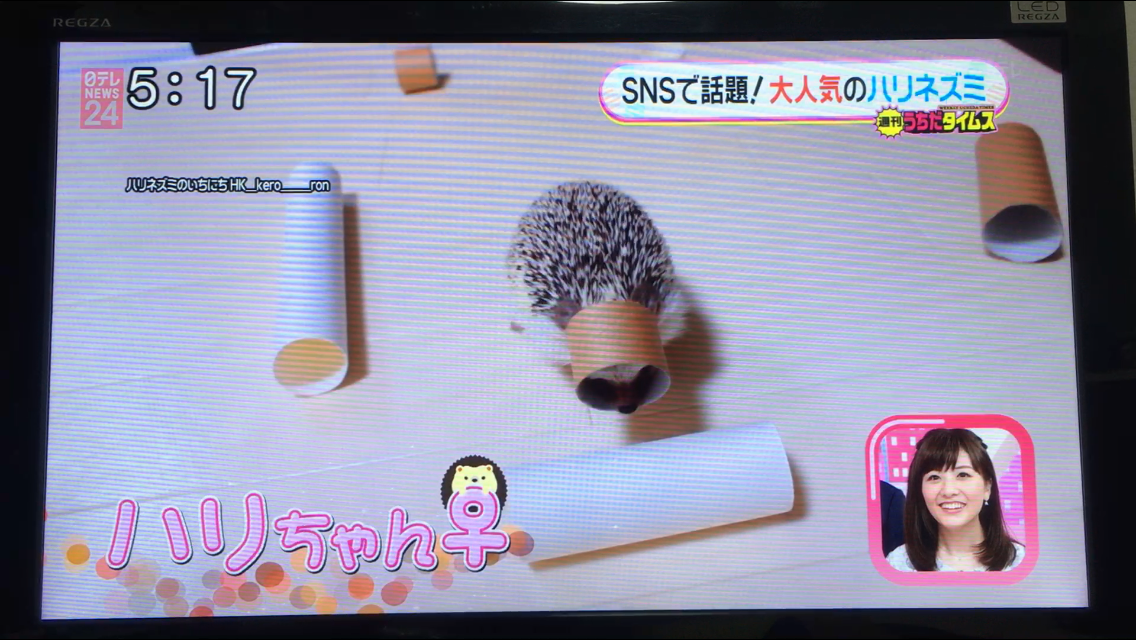 ハリネズミ ハリちゃん oha!4