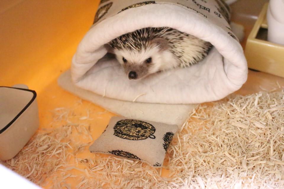 ハリネズミ 寝袋 フォトコン