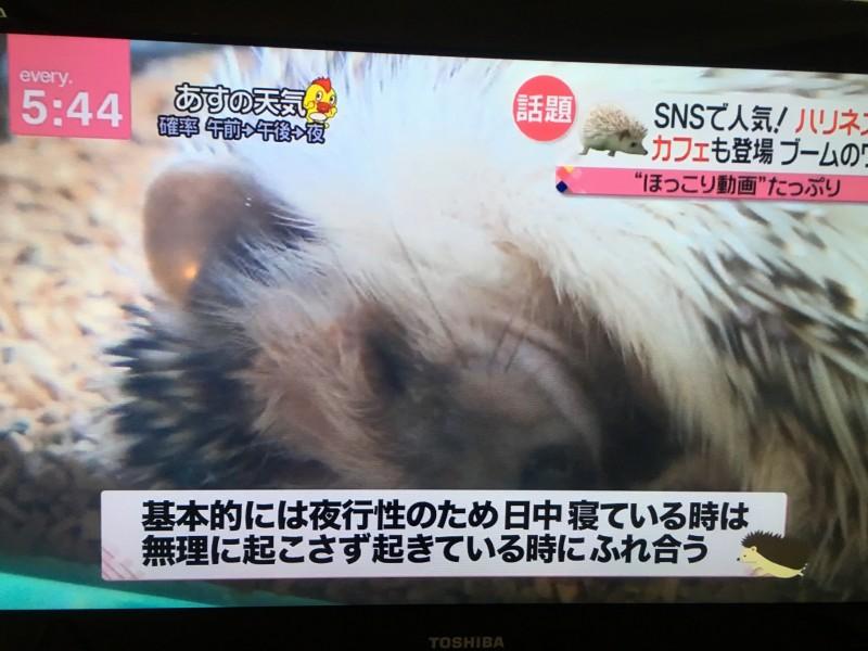 ハリネズミ newsevery