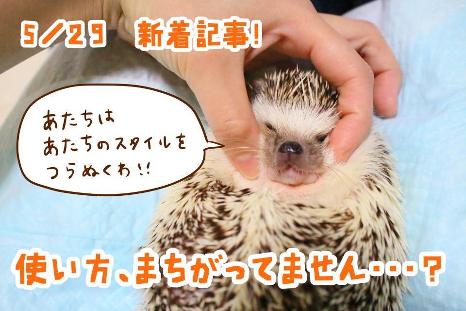 ハリネズミ 液体歯磨き マキシガード アンティング 歯肉炎 歯周病