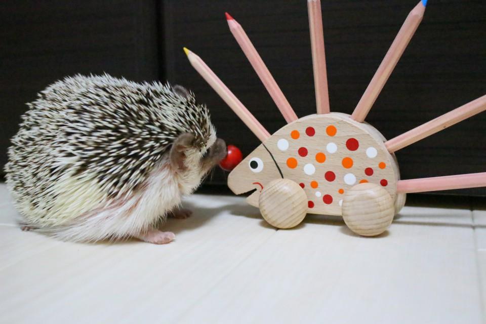 ハリネズミ 色鉛筆立て