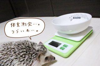 6月の体重測定会。