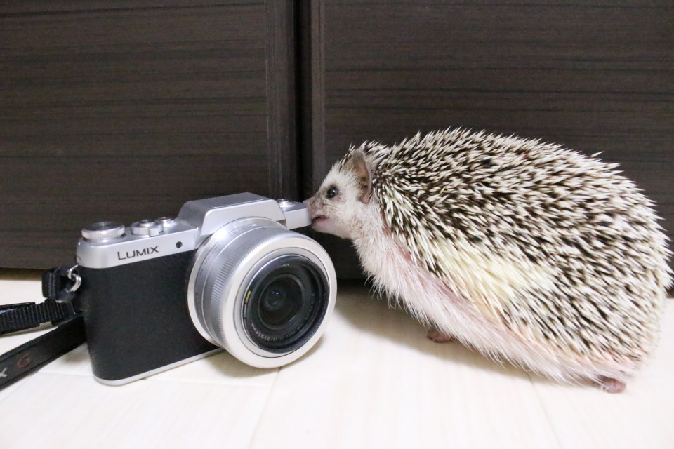 ハリネズミ カメラ 写真