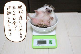 7月の体重測定会。
