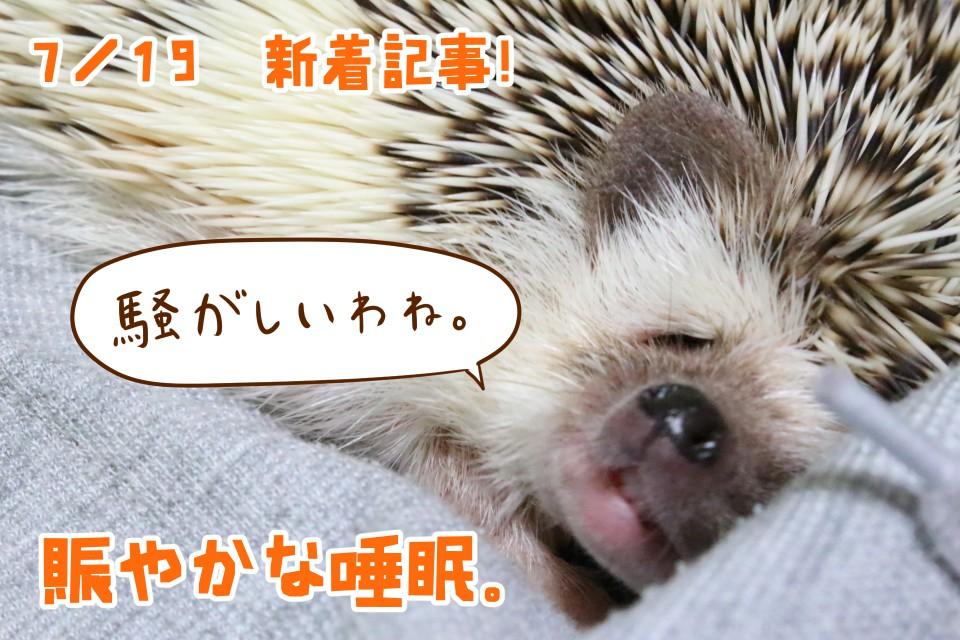 ハリネズミ 睡眠