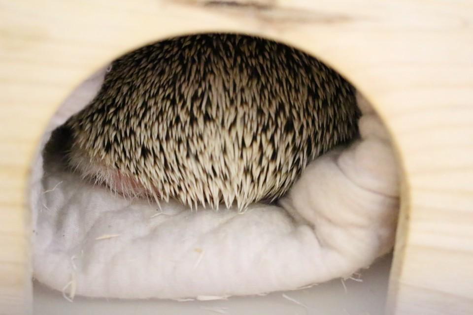 ハリネズミ 寝袋