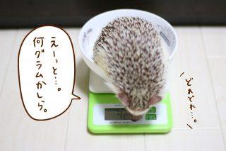 8月の体重測定会。