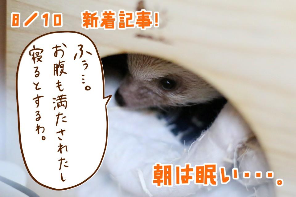 ハリネズミ 朝ごはん 眠い