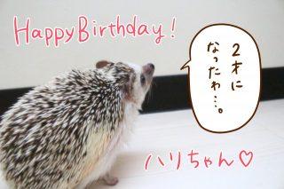 HAPPY BIRTHDAYハリちゃん!